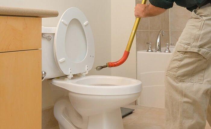 Best Toilet Snake